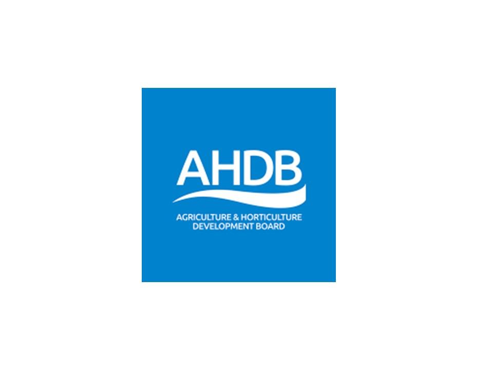 AHDP.jpg