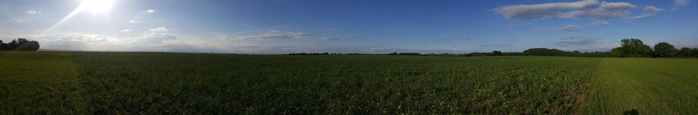 Panorama of the Roadshott field taken on 13th June 2017