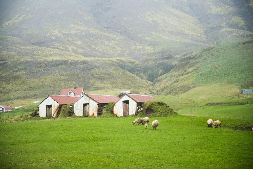 Iceland Architecture-13.jpg