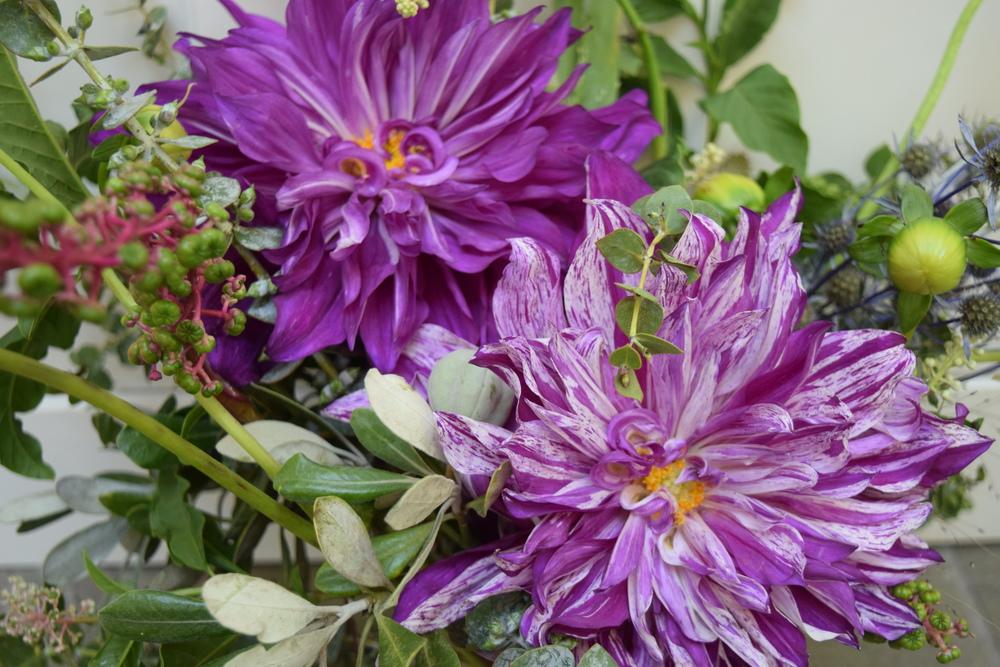 Purple dahlia bouquet by San Diego floral designer Botanicamuse / @botanicamuse