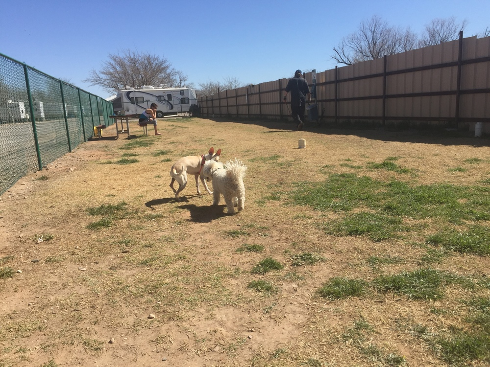 Two fenced dog runs where your pets can run freely. (Cleanup after your pet please.)
