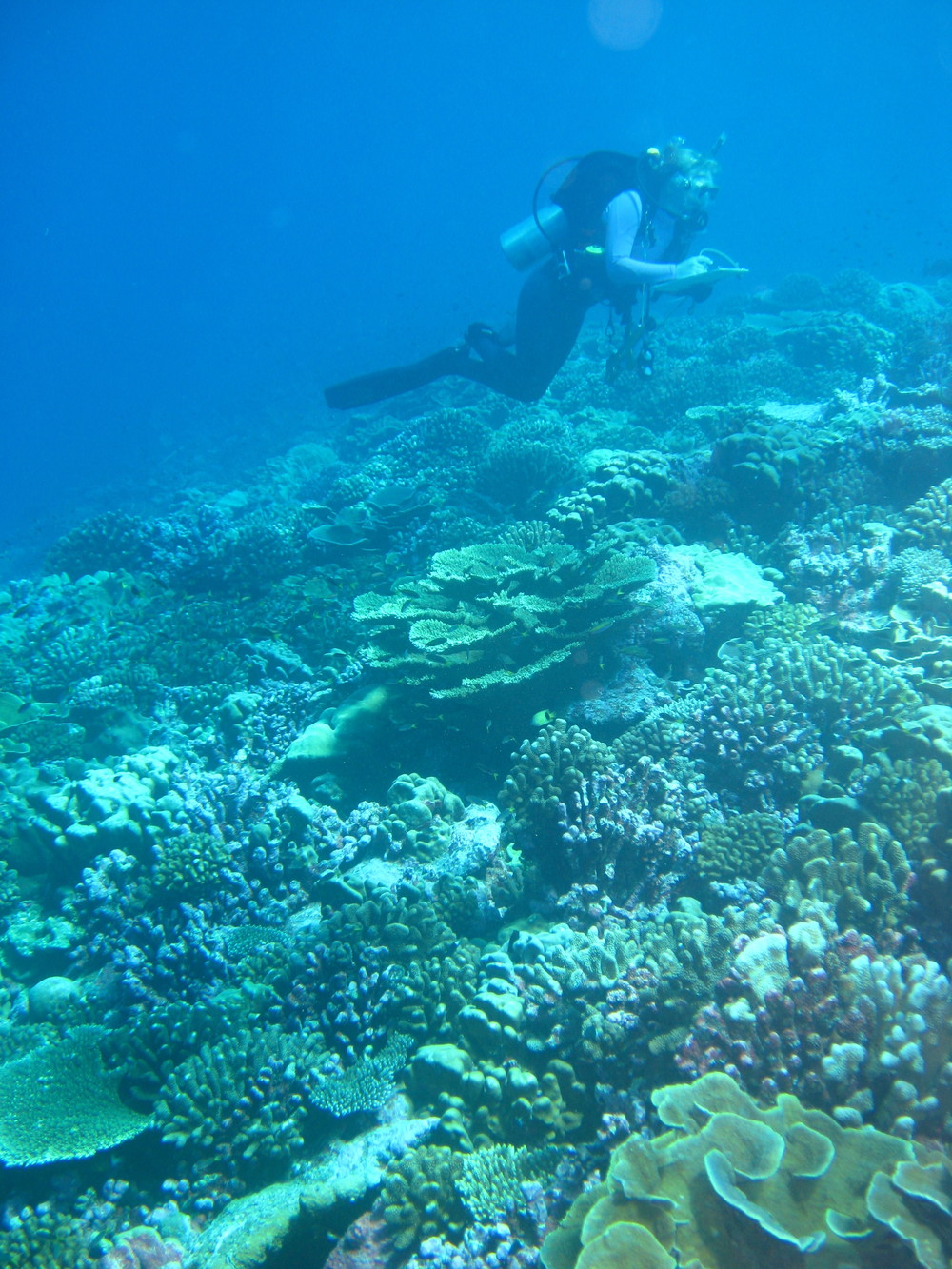 Coral Reef Status and Trends