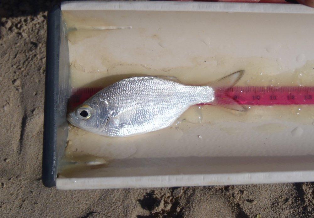 Reef Fish Life History