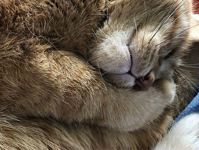 My morning so far... #catsofinstagram #waldocat #dmitricat #sleepybabies
