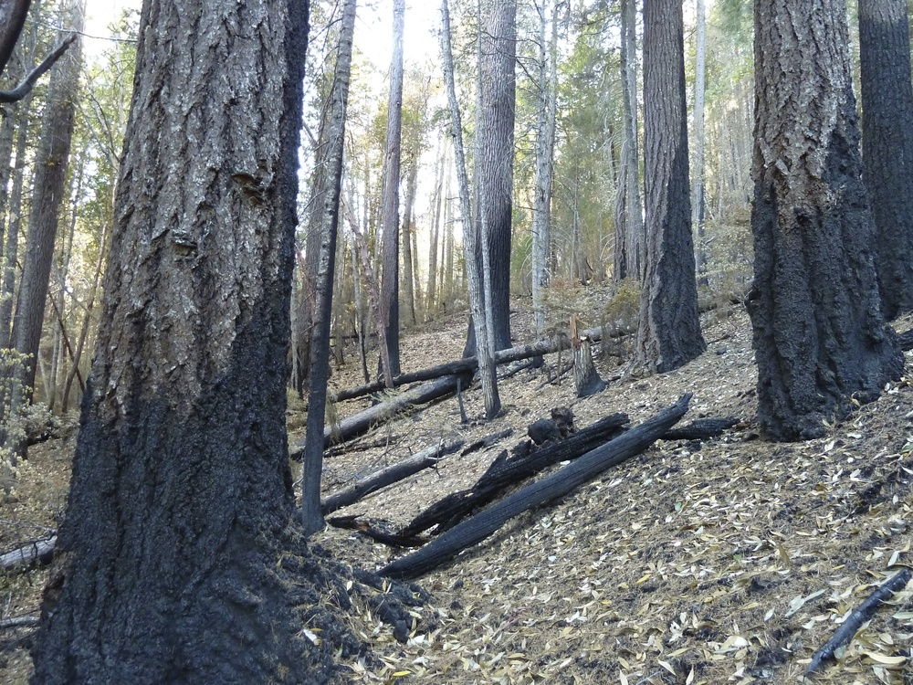 Fire Adapted Forests