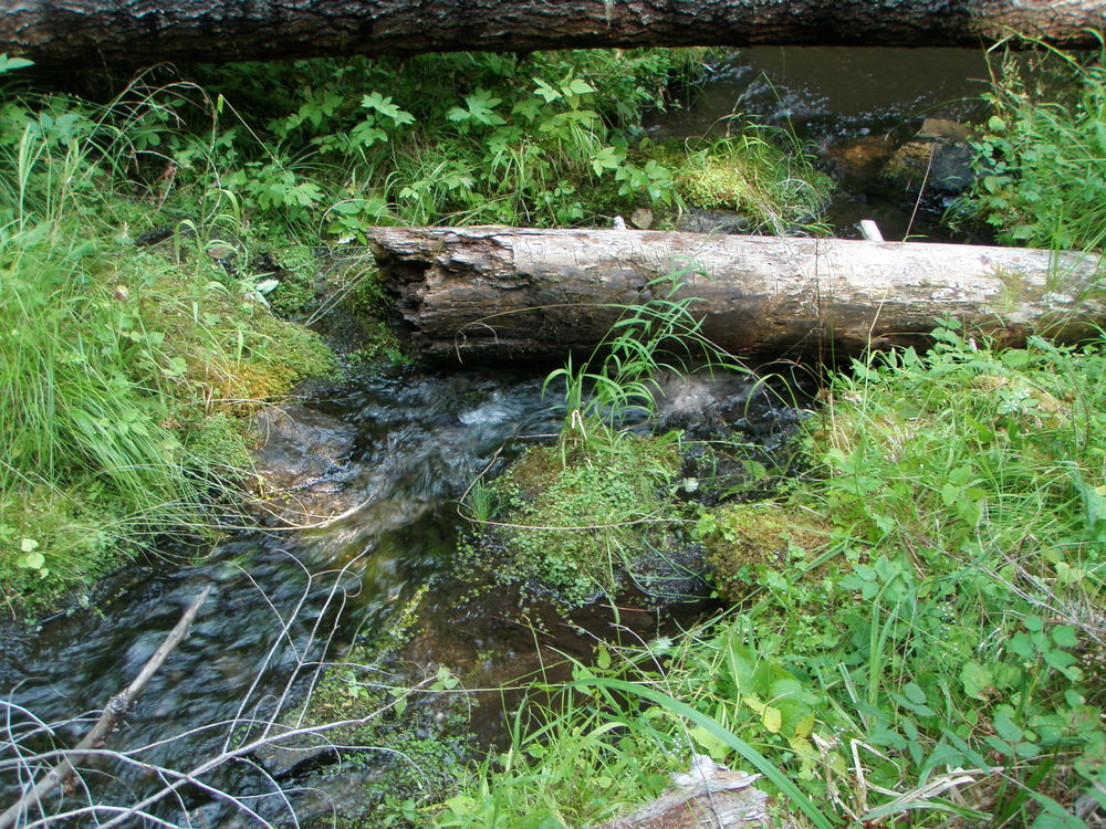 Headwater Streams