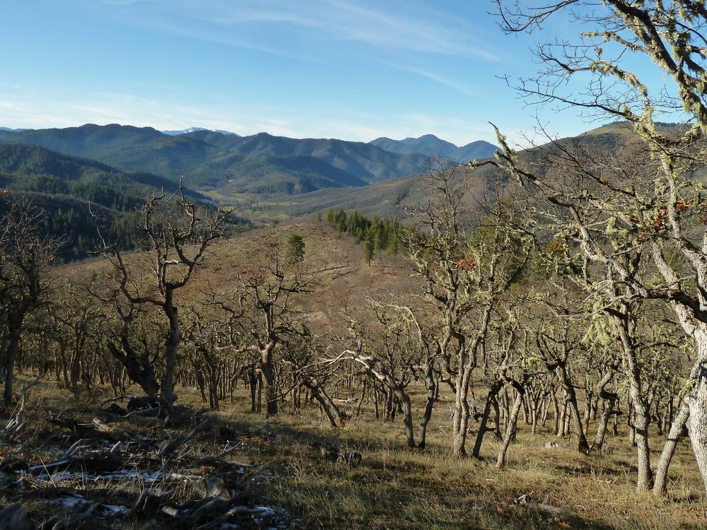 Trillium Mountain Roadless Area