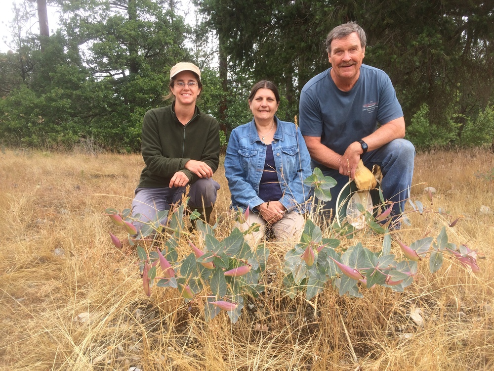 Southern Oregon Monarch Advocates (SOMA) volunteers Suzie Savoie, Linda Kappen and Tom Landis, with a heartleaf milkweed plant going to seed on site.