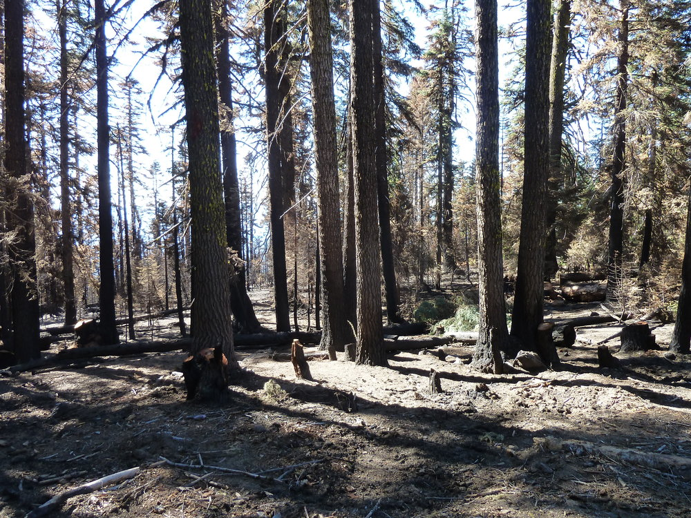 The 2016 Gap Fire on the Siskiyou Crest near Condrey Mountain, just below the PCT