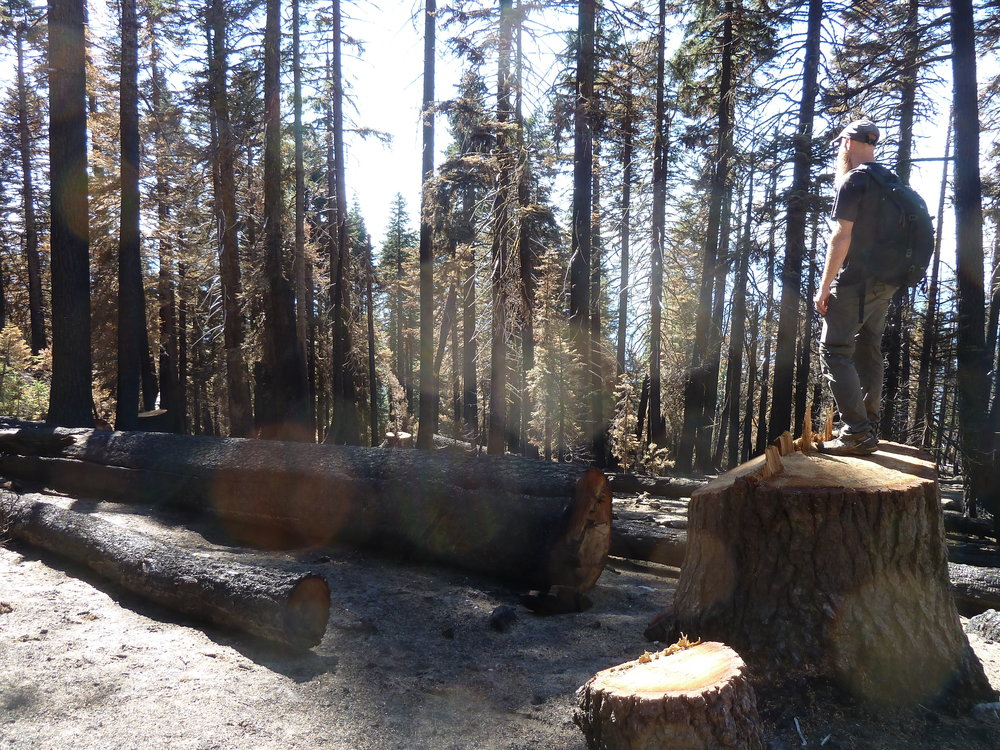 Klamath National Forest intends to log the Gap Fire on the Siskiyou Crest near Condrey Mountain, just below the PCT