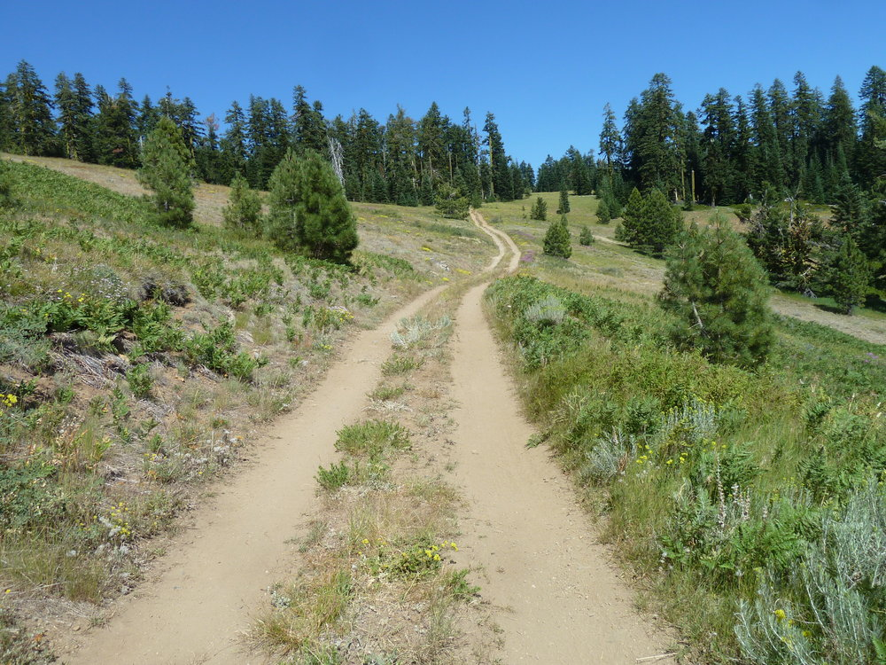 This off-road vehicle track within the Big Red Mountain Botanical Area is creating major resource damage in an area known for its outstanding biological and botanical diversity.