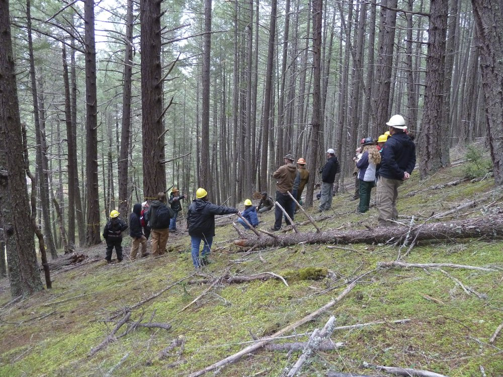 Public input during field trips into proposed logging units is a crucial way to engage in local land management issues in the Applegate.