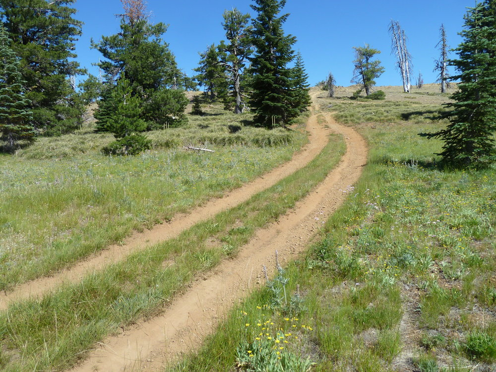 Illegal OHV use in the Big Red Mountain Botanical Area on the Siskiyou Crest.