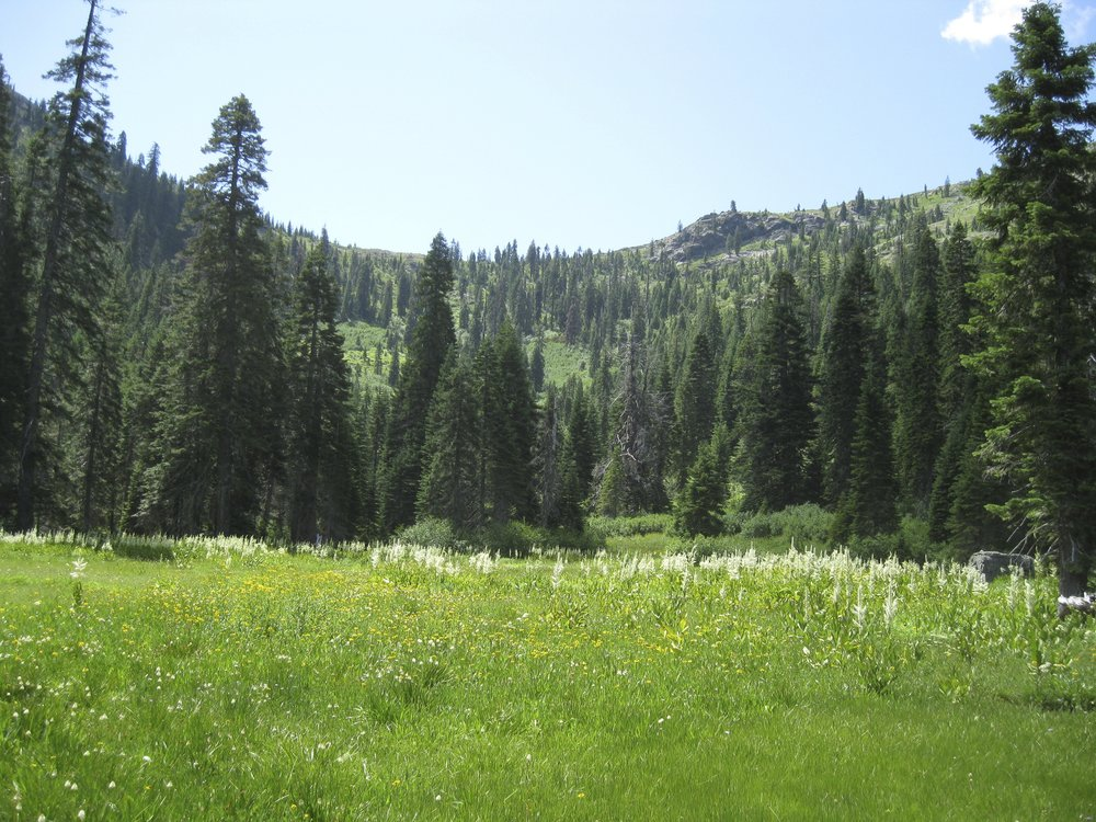 It's been many years since cows have grazed Steve Fork Meadows in the Red Buttes Wilderness. ANN will advocate to keep this wildlife and pollinator paradise cow-free in the Applegate Grazing Complex project.