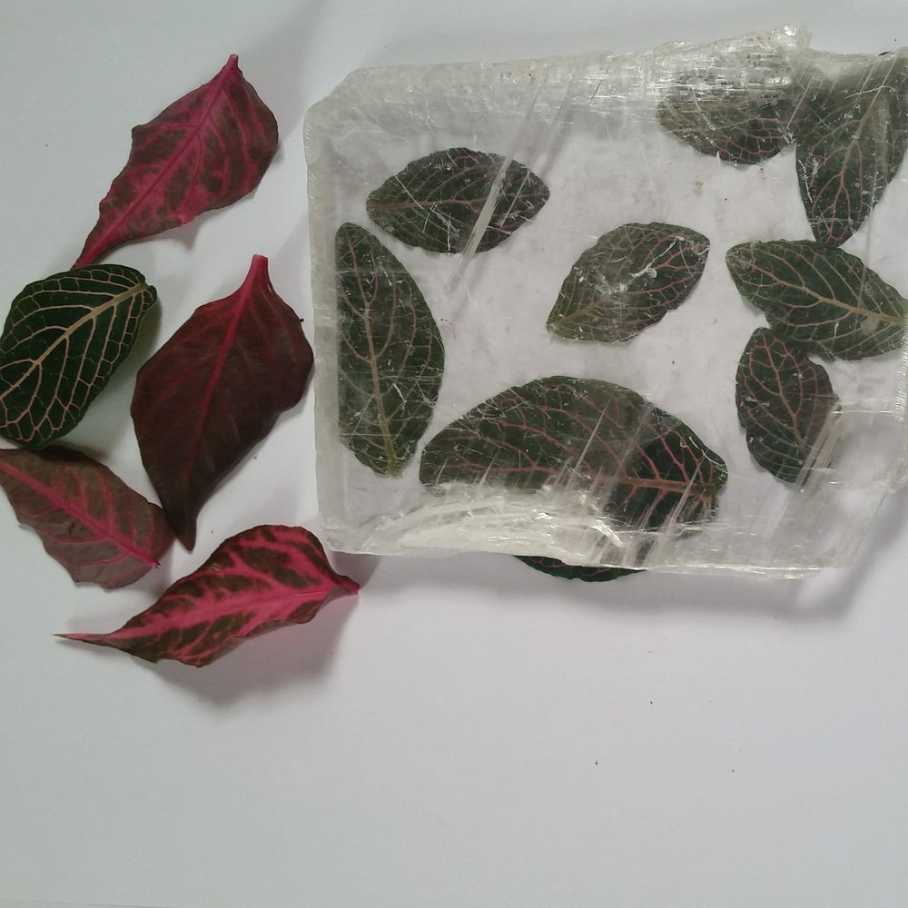 Fittonia Leaves (native to Peru)