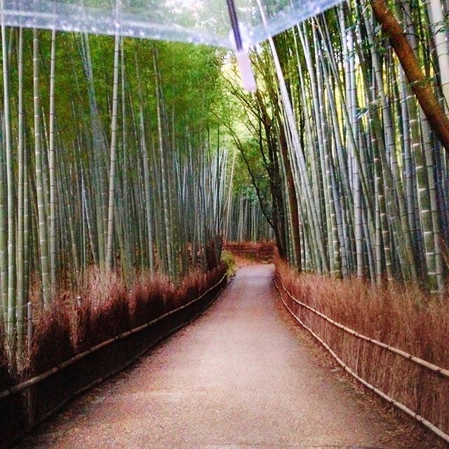 Hello from the peaceful vibes of the Kyoto bamboo forest. We hope everyone is having a beautiful Easter Sunday.🍃