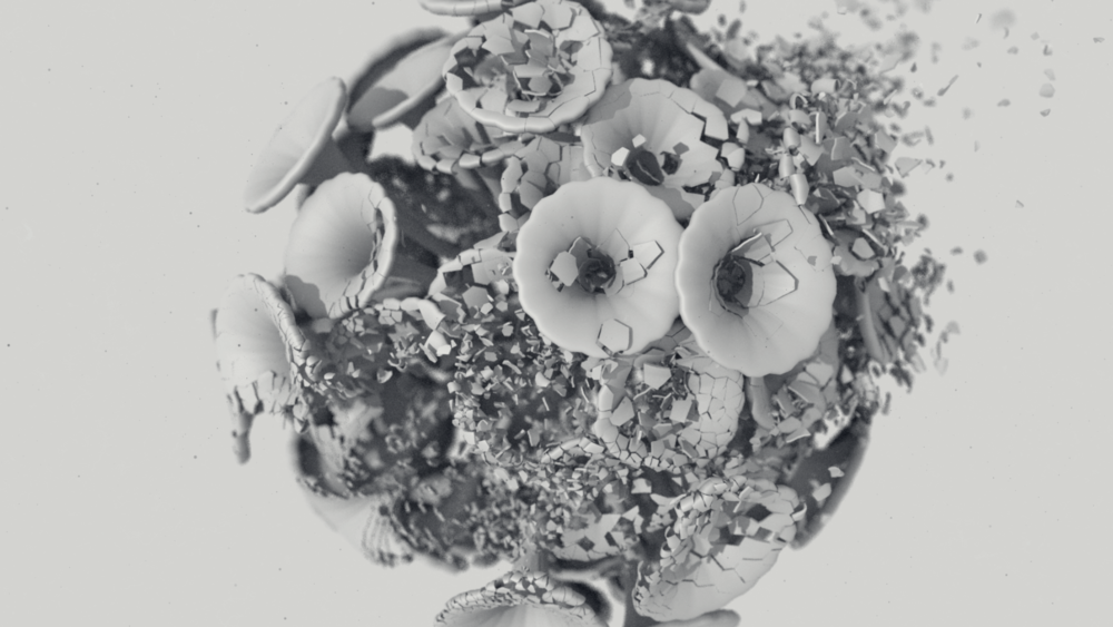 flower_01-00023_1920.png