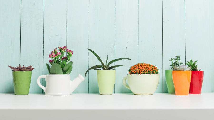 Easy Houseplants for Every Lifestyle