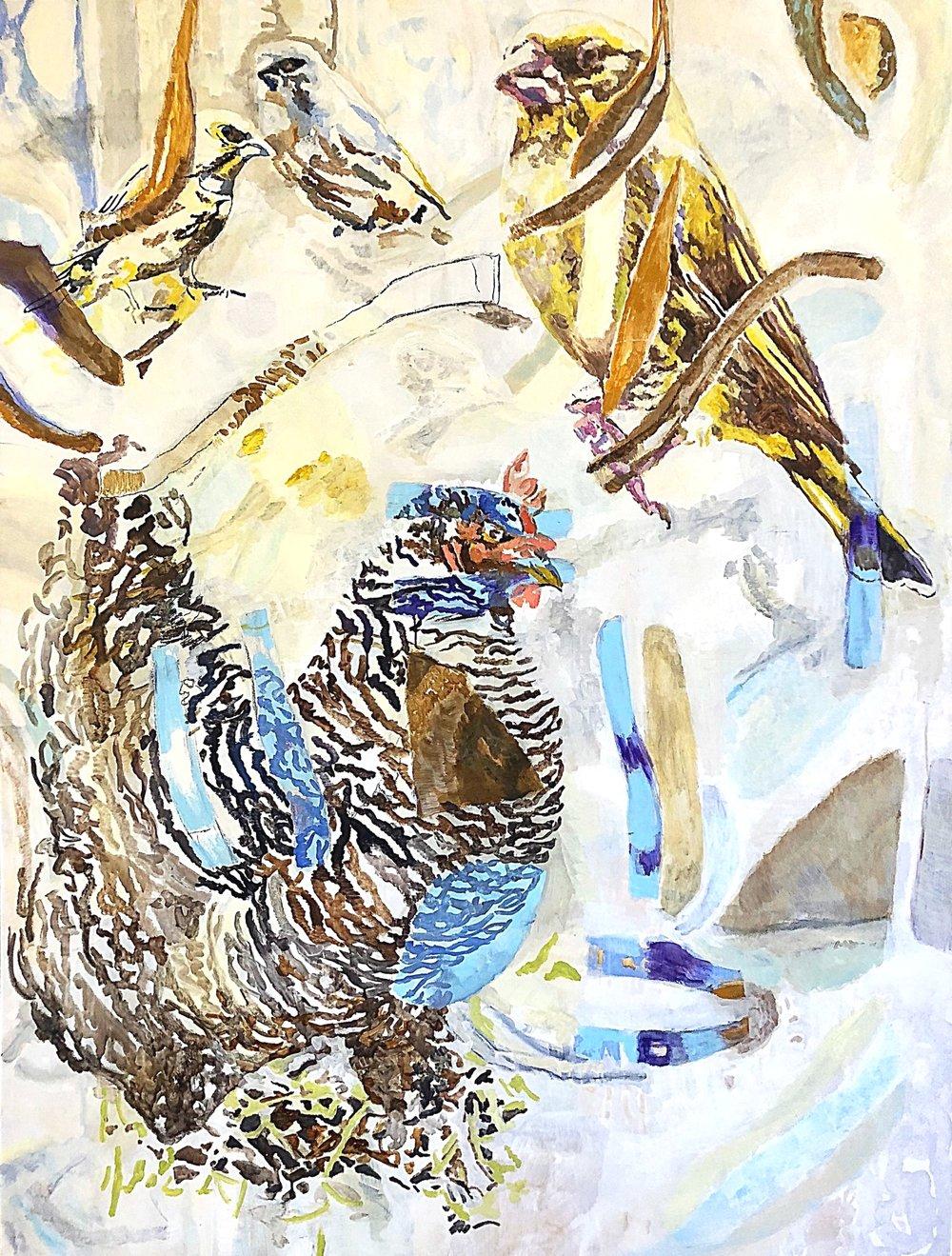 chicken and birds