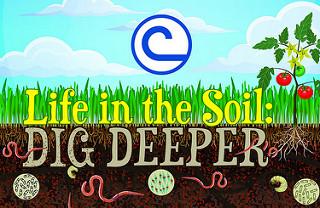 life in the soil.jpg