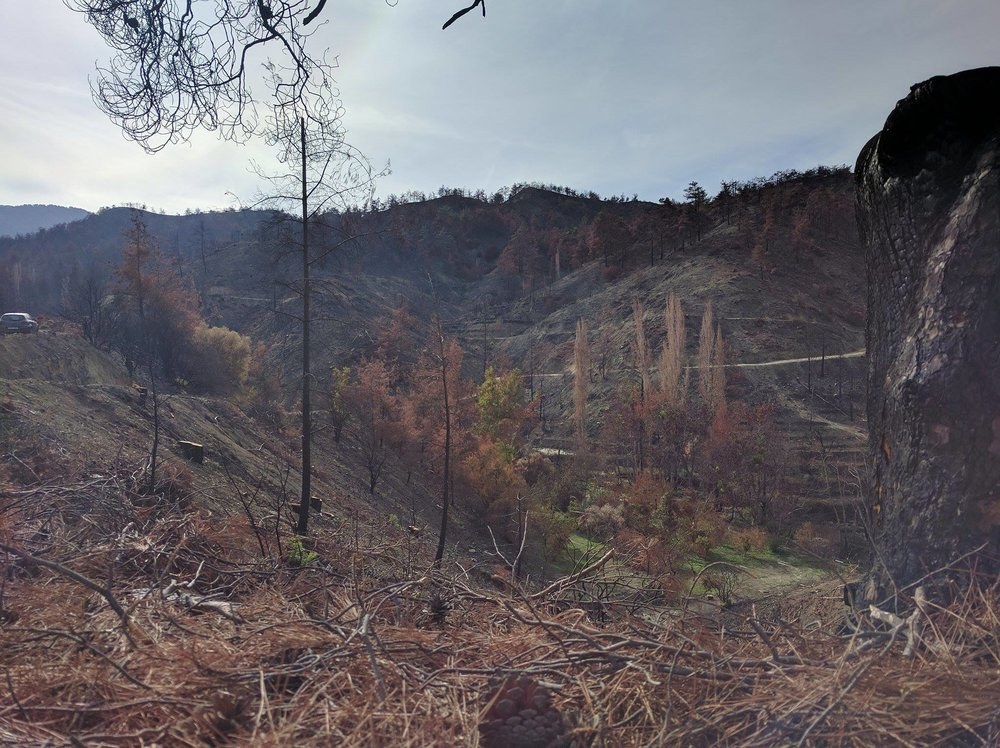 burnt trees in Solea valley