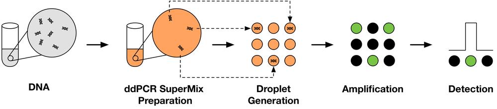 Mojarro et al. (2017)  LPS XLVIII   ePoster