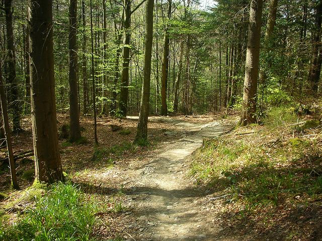 Gwdir Forest (pic credit: Michael Spiller)