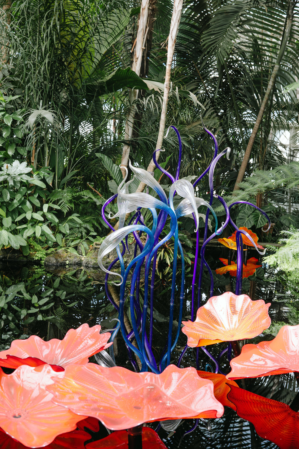 CHIHULY NY BOTANICAL GARDEN_BRIAN SAMUELS_AUGUST 2017-7403.jpg