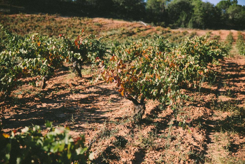 SPAIN DAY 2-0606.jpg