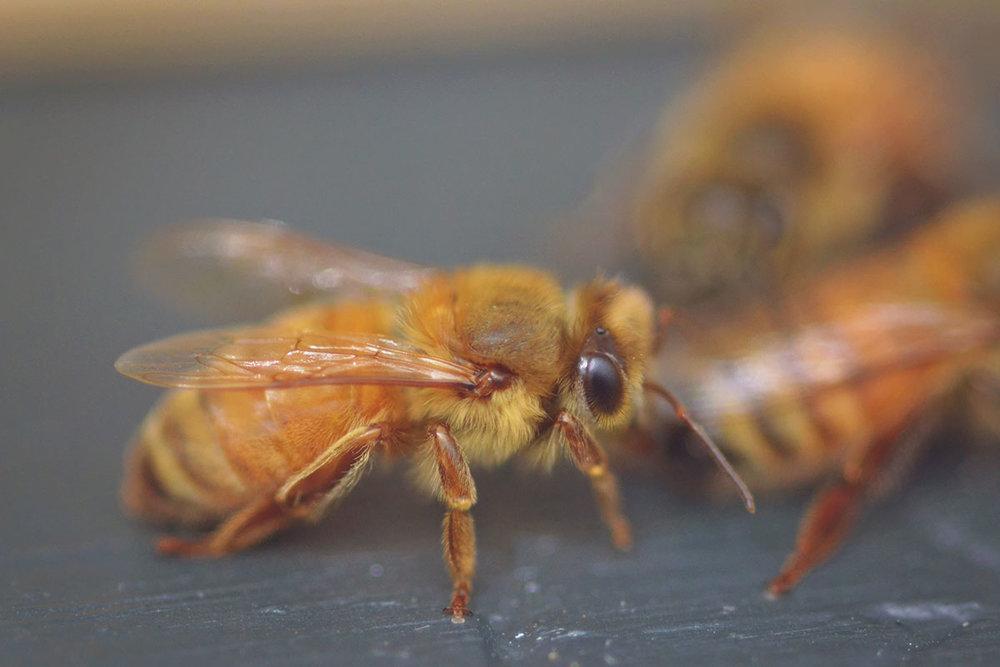 5e0c4-bees_5.jpg