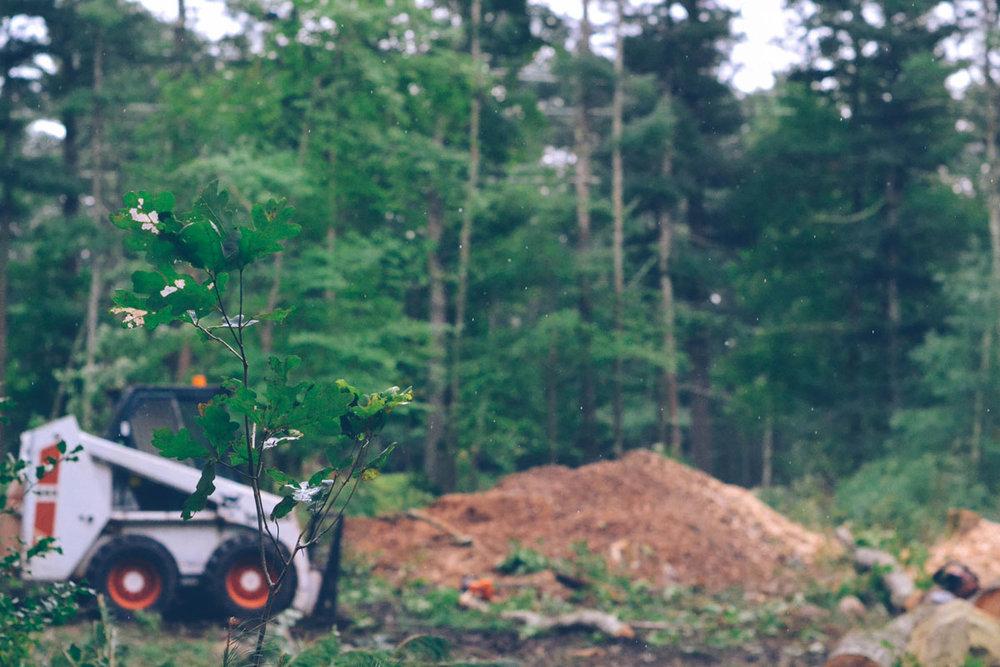479af-090518_treecutting_12.jpg