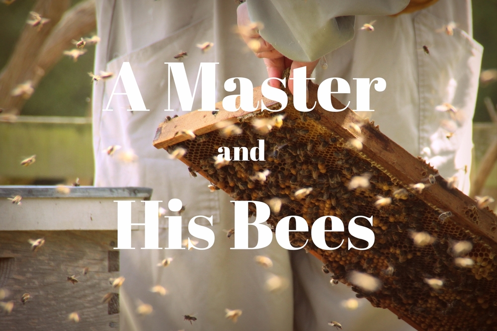 Learn about Dhafer and his bees in the suburbs of London.