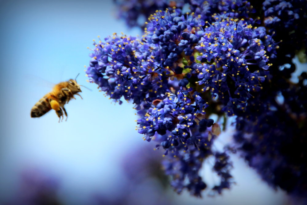 THE BEES -