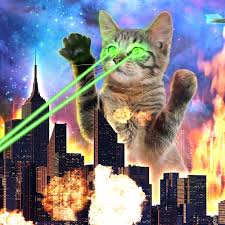 Laser Cat Reading SeriesK-Day Spectacular  White Whale Bookstore