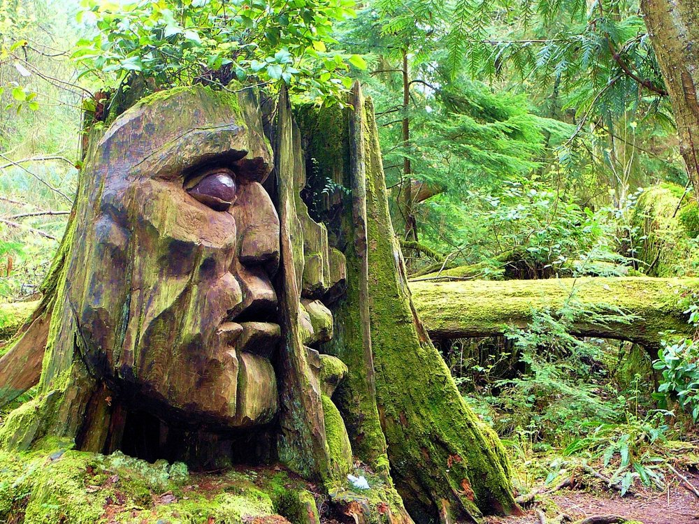 face carved into tree.jpg
