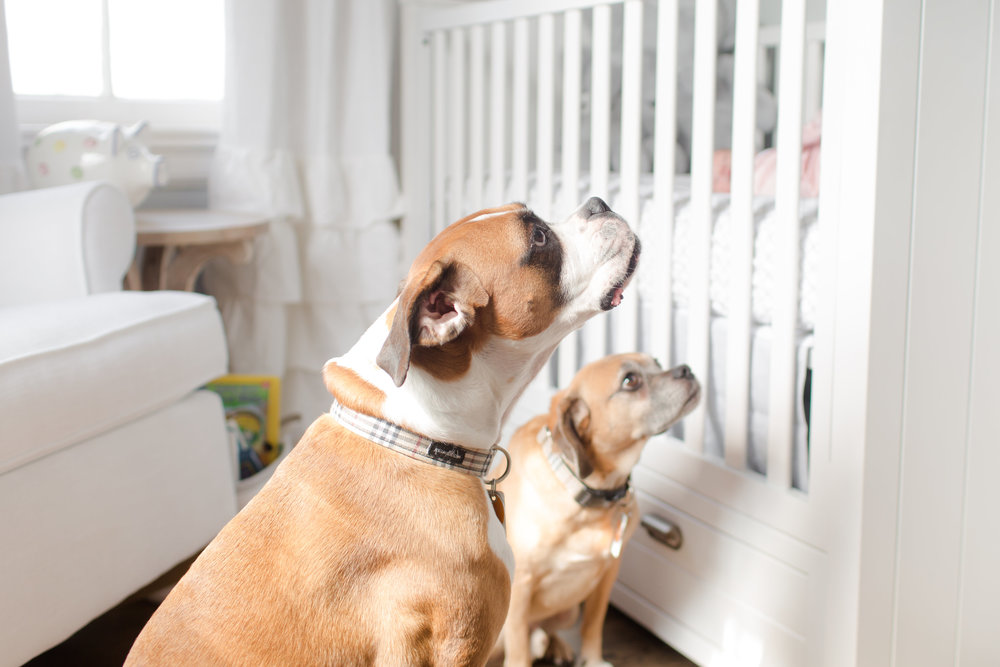 lifestyle_newborn_session_tips_ideas_photography_nursery_white_background_master_bedroom_dogs_funny_candid.jpg