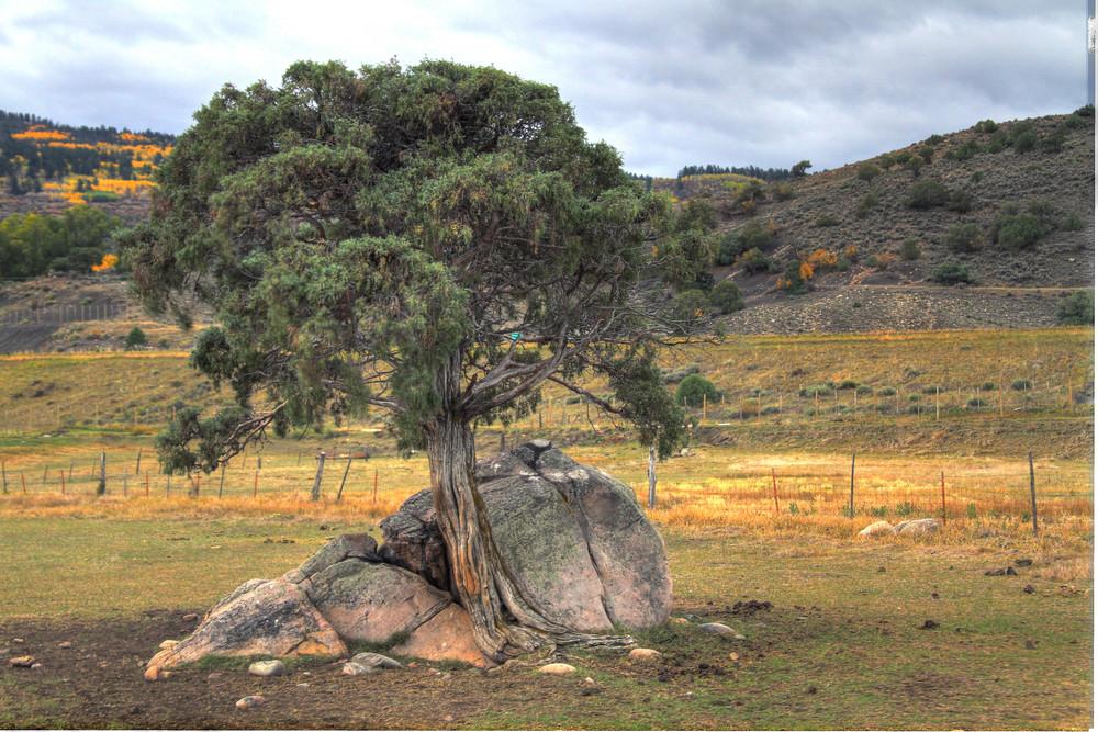 TreeFinal.jpg