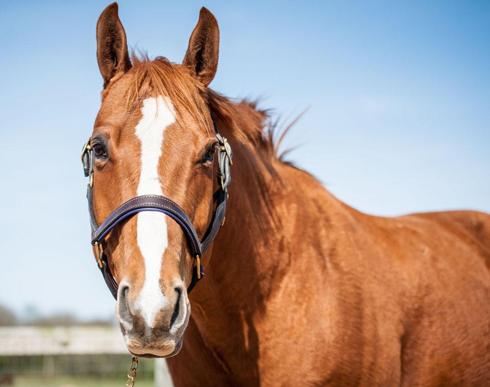 Carlott      18 year old Quarter Horse gelding