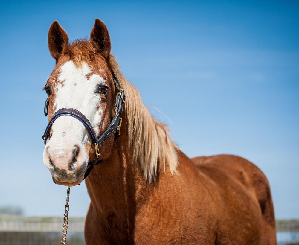 Splash      14 year old Paint mare