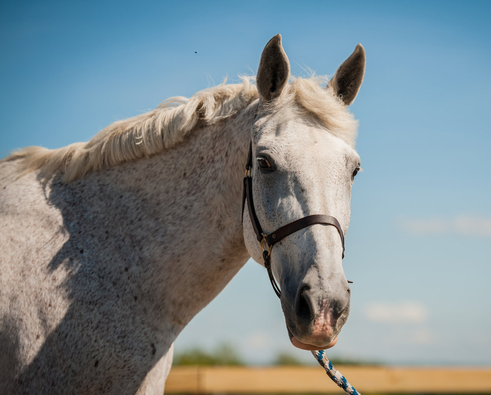 Pia      28 year old Sport Horse mare