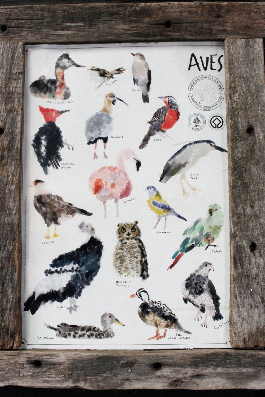 Argentinan Bird Species