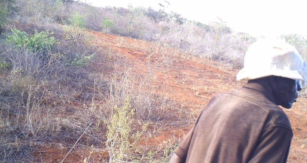 Wabongo, Mwakoma