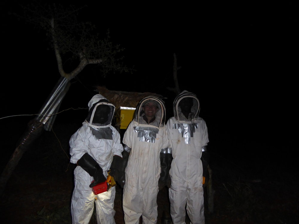 Beehive Night Work