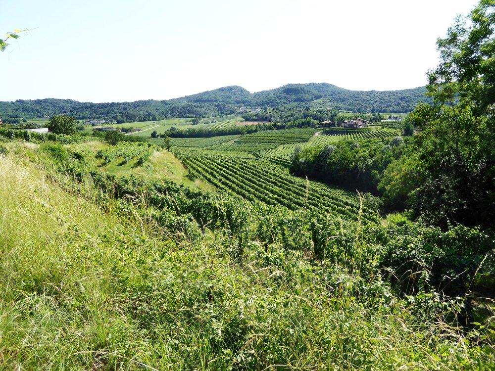 Blažič Wines
