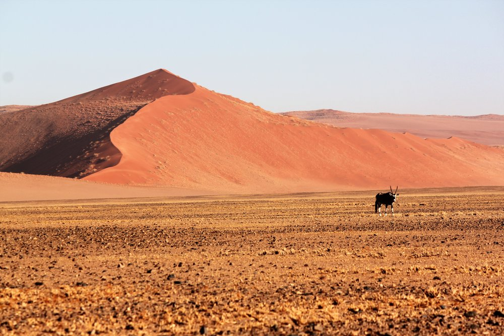 High Red Dunes