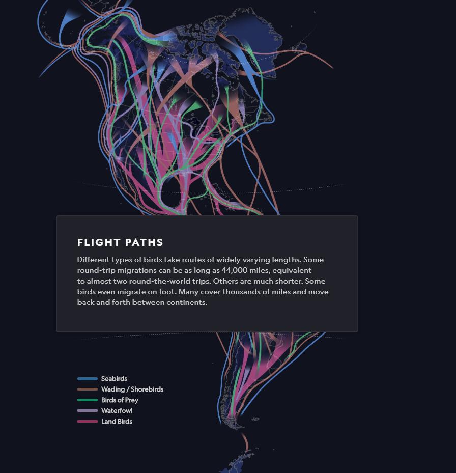 Interactive Map on Migratory Birds