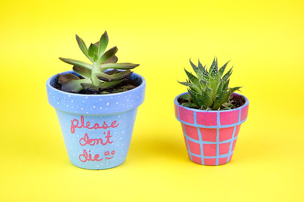 succulent-blue.jpg