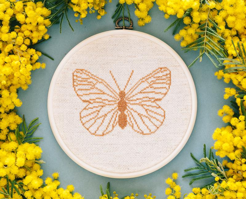 Butterfly-Main.jpg