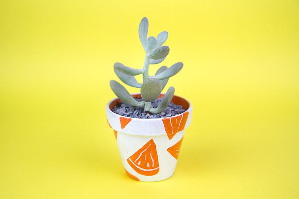 succulent-orange.jpg