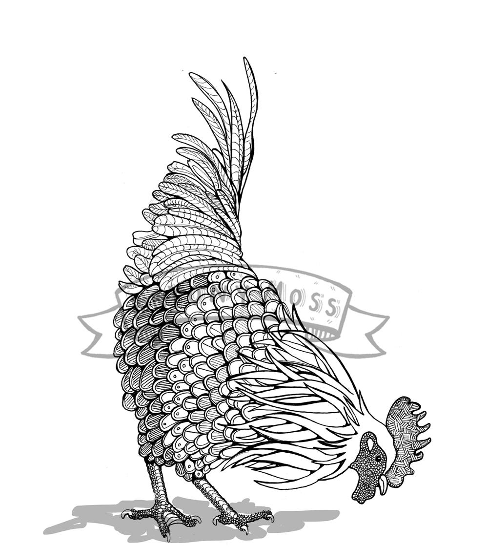 cockeral-pecking.jpg